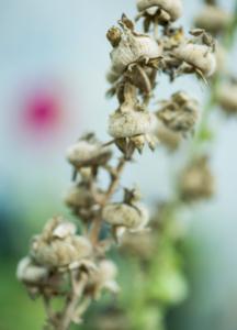 Blomma slå ut